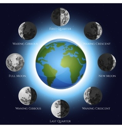 Moon Phases vector image vector image