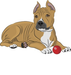 American staffordshire terrier a vector