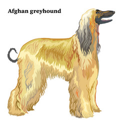 Colored decorative standing portrait of afghan vector