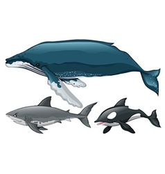Different type of whale and shark vector