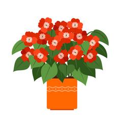 Impatiens house plant in flower pot vector