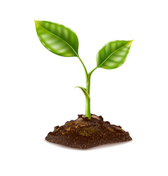 Realistic green seedling grows in soil vector