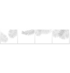 tropical leaves shadows blurry palm plant leaf vector image
