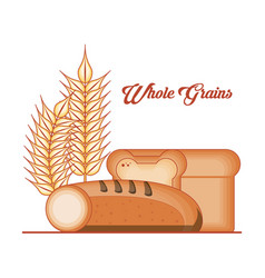 whole grains products food vector image
