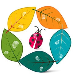 Leaves in Circle with Ladybug Insect Nature Symbol vector image