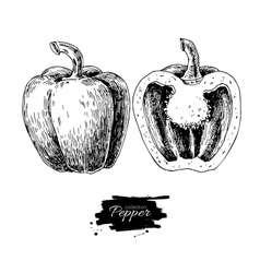 Pepper hand drawn Vegetable vector image vector image