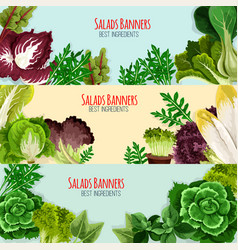 salad greens and leaf vegetables banner set vector image