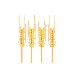 ripe ear of wheat icon vector image
