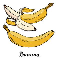 cartoon calligraphy coloured bananas poster vector image