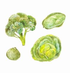 Different varieties of cabbage peking broccoli vector