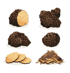 Truffle black truffle set vector