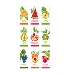Vertical cards or banners set of fresh fruits vector
