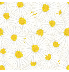white aster daisy flower seamless background vector image