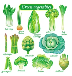 green vegetables vector image