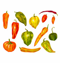 Many different peppers watercolor set bulgarian vector