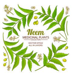 Neem elements set on white background vector