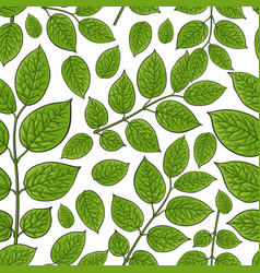 seamless pattern of birch honeysuckle leaves vector image vector image