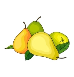 Pear fruit vector image