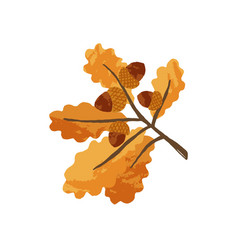 Gold autumn leaves and acorns on oak tree branch vector