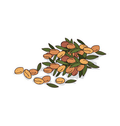 Isolated clipart argan vector