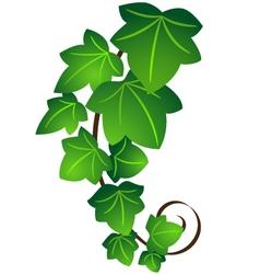 Ivy twig vector