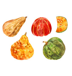Many different pumpkins watercolor set yellow vector