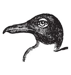 Black headed gull vintage vector