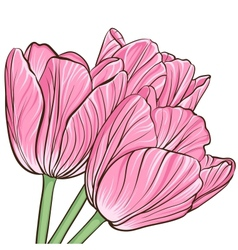 Floral background with flowers of peony vector image vector image