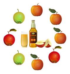 apple cider set vector image