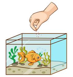 Hand feeding goldfish in tank vector