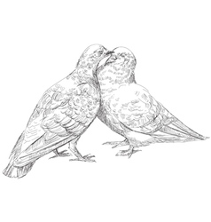 Lovers Pigeons kissing vector