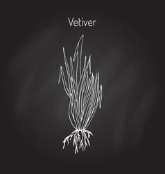 Vetiver aromatic plant vector