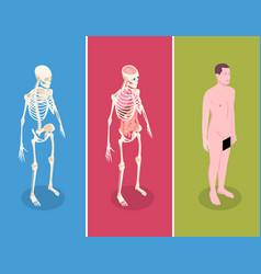 anatomy isometric banners set vector image