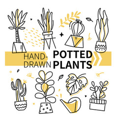 hand-drawn potted plants collection - set of vector image