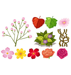 large set nature with flowers and leaves on vector image