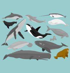 Marine Mammals vector