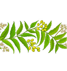 Neem branches pattern on white background vector