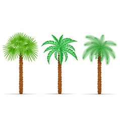 Palm tree 04 vector