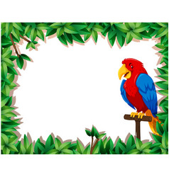 Parrot with nature frame vector