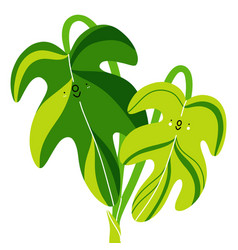 two philodendron leaves aroids cartoon vector image