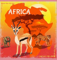 cartoon african fauna template vector image