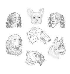 Dog breed portraits hand drawn sketches vector