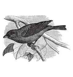 Indigo bird vintage vector