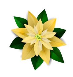 Poinsettia christmas star icon vector