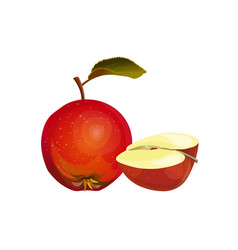 red apple and half vector image