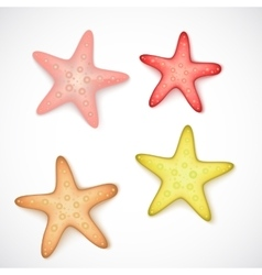 Starfishes on white background vector image