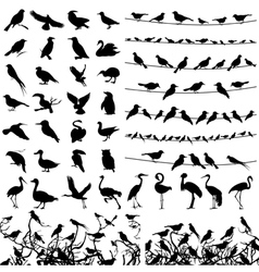 Silhouette of birds vector image vector image