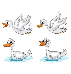 Four ducks vector image vector image