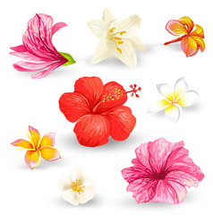 set of of tropical hibiscus vector image