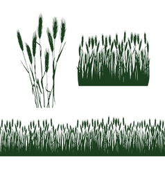 silhouettes of spikelets vector image